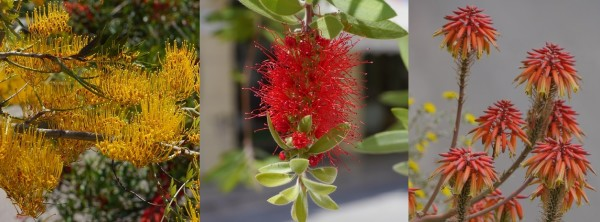 Blumen 2